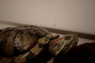 Miss Turtle - Day 1